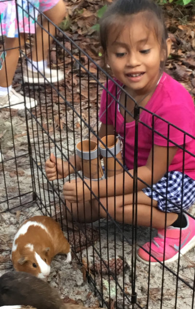 cute little girl watching a guinea pig